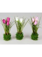 Formano Tulpe auf Grassockel farblich sortiert